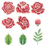 Broderie Rose Ornament Images libres de droits