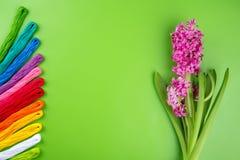 Broderiregnbågefärger Floss på en grön bakgrund med rosa färgvårblomman Begrepp för att sy och broderi, kvinnas dag 8 Mars Royaltyfria Foton