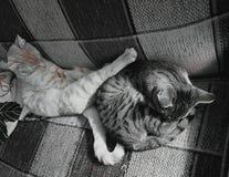 broderlig förälskelse arkivfoto