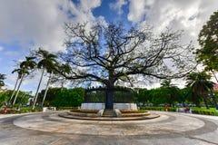 Broderskap parkerar - havannacigarren, Kuba royaltyfria foton