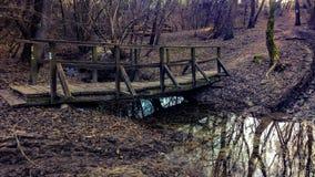 Brodge del bosque Imágenes de archivo libres de regalías
