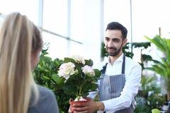 Brody ogrodniczki mienia hortensja w Flowerpot zdjęcie stock