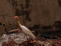 Brodza ptak i klingerytu odpady zdjęcia royalty free