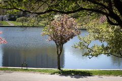 Brodzenie laguny parka Cleveland outside muzeum sztuki obrazy stock