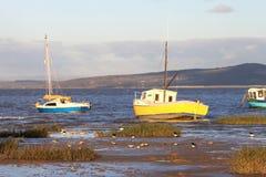 Brodzowie karmi w błocie na krawędzi Morecambe zatoka. Zdjęcia Stock