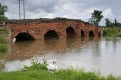 broeckingtonflod royaltyfri fotografi