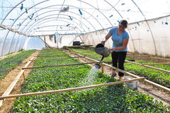 Broeikasfolie voor het kweken van vroege groenten Royalty-vrije Stock Foto