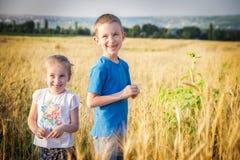 Broer en zuster op gouden tarwegebied Stock Afbeeldingen