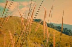 Broga小山,雪兰莪 免版税库存图片