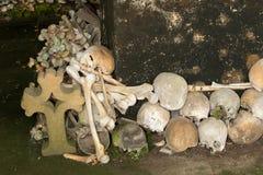 Brogować czaszki Zdjęcie Royalty Free