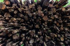 Brogujący drewno notuje szerokiego kąta widok obraz royalty free