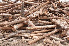 Brogujący drzewny drewno notuje tło Obraz Stock