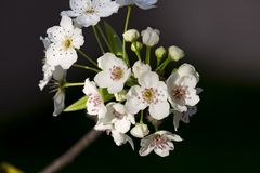 Brogujący makro- kwiat Zdjęcia Royalty Free