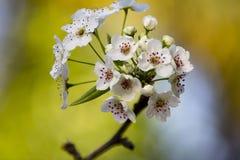 Brogujący makro- kwiaty Zdjęcie Royalty Free
