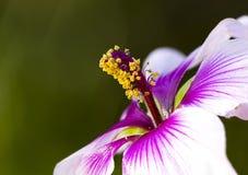Brogujący makro- kwiaty Obrazy Stock