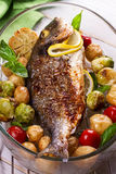 Broiled dorado fish. Roasted dorado fish with brussels sprouts, tomatoes, garlic, young potato and greens royalty free stock photography
