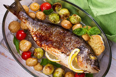 Broiled dorado fish. Roasted dorado fish with brussels sprouts, tomatoes, garlic, young potato and greens. View from above, top studio shot royalty free stock photography