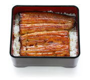 Broiled eel on rice,unaju, japanese unagi cuisine Royalty Free Stock Images