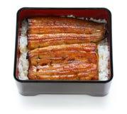 Broiled eel on rice,unaju, japanese unagi cuisine. On white background royalty free stock images
