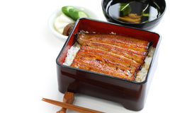 Broiled eel on rice,unaju, japanese unagi cuisine Stock Images