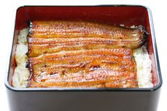 Broiled eel on rice,unaju, japanese unagi cuisine stock image