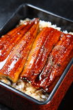 Broiled eels on rice. Studio shot of Broiled eels on rice royalty free stock photo