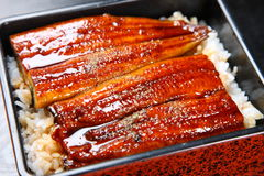 Broiled eels on rice. Studio shot of Broiled eels on rice royalty free stock image