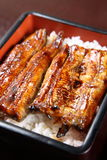 Broiled eels on rice. Studio shot of Broiled eels on rice stock images