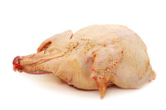 Broiler chicken raw Royalty Free Stock Image