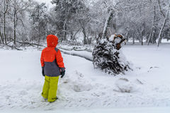 Broke down tree on the severity of fallen snow. Child looking ov Stock Image