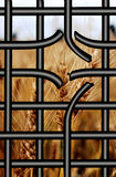 Broken bars of proson with view to the wheat Stock Photography