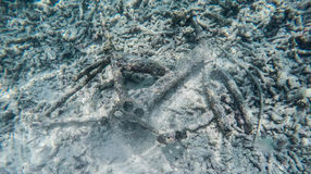 Broken bicycle underwater Royalty Free Stock Images
