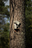 Broken Birdhouse on Pine Tree Stock Photography
