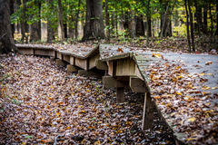 Broken Boardwalk through Forest Royalty Free Stock Photos