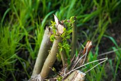 Broken branch among the grass royalty free stock image