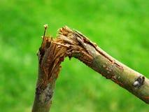 Broken Branch from Storm Destruction. Detail of broken branch for storm destruction Stock Photo