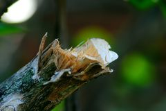 Broken Branch. A broken tree branch after being cut down, suitable for anything with nature concept Stock Photography