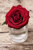 Broken bud fragrant roses Stock Image