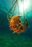 A broken buoy and sun in the Red Sea. Stock Photos