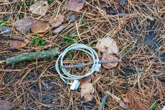 Broken charge from iphone on fallen needles in a coniferous autumn forest.  stock photography