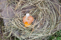 Broken chicken eggs on stone and hay outdoor Royalty Free Stock Photography