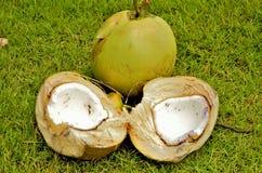 Broken coconut  closeup Royalty Free Stock Photos
