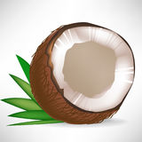 Broken coconut with leaves Royalty Free Stock Photography