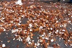 Broken Coconuts Ganesh Festival Stock Image