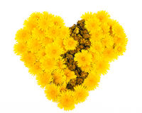 Broken Dandelion Heart Royalty Free Stock Photos