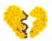 Broken Dandelion Heart Stock Photography