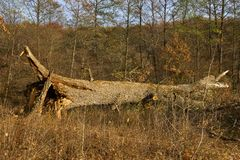 Broken down oak stock image