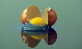 Broken egg. Broken chicken egg on glass surface Stock Images