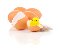 Broken egg with chicken Royalty Free Stock Photo