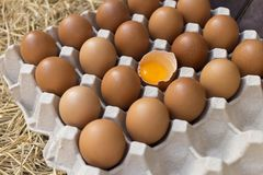 Broken egg and eggs on tray. Put on straw royalty free stock photos